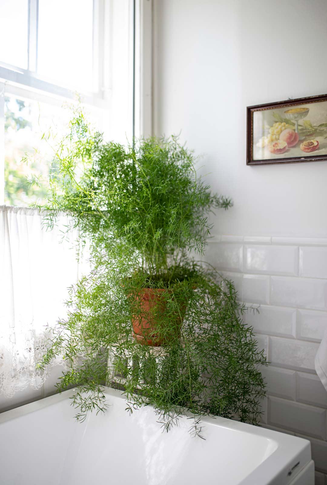 Viherkasvit luovat viihtyisyyttä.