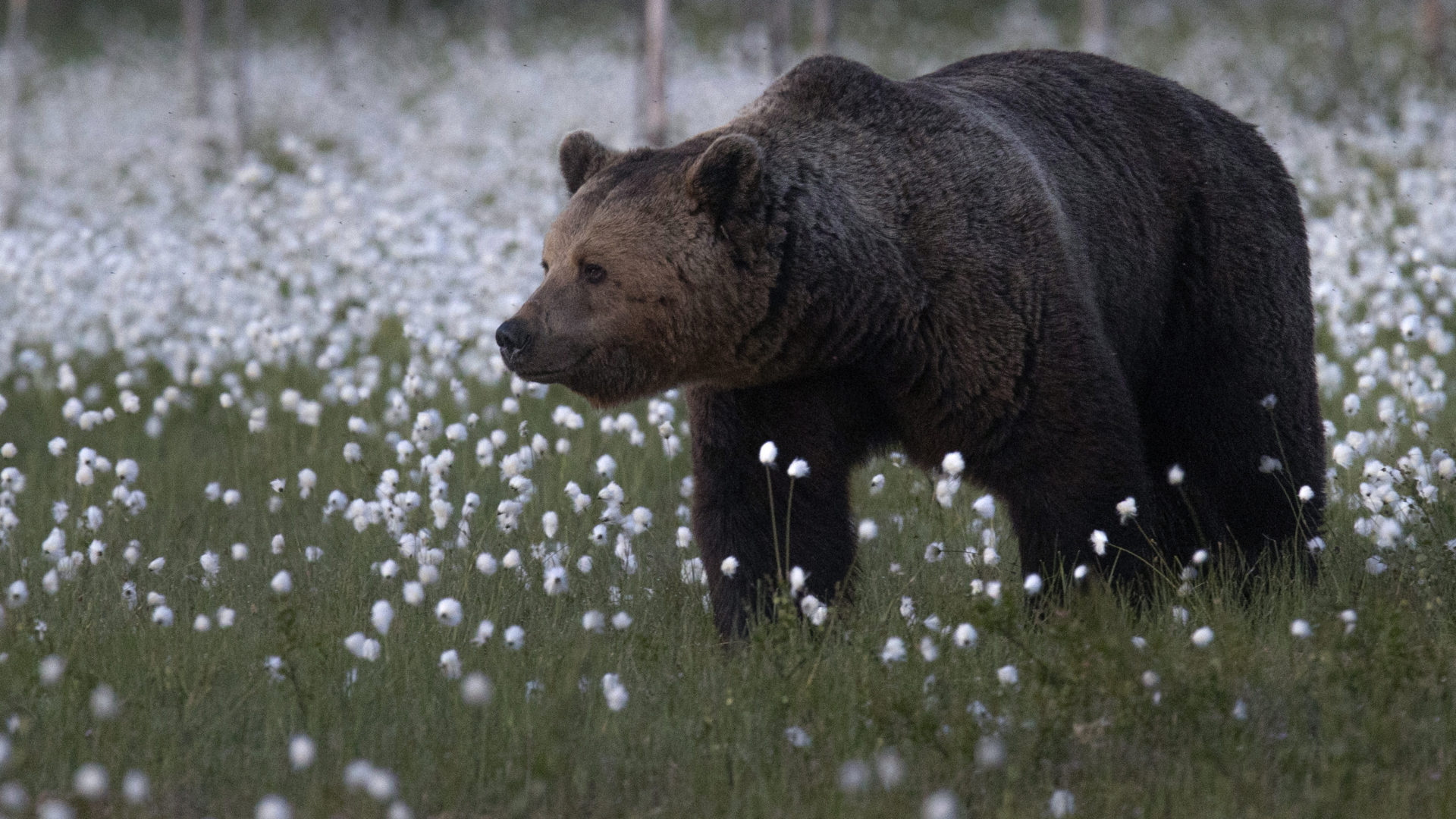 Karhujen mailla luontokuvaus