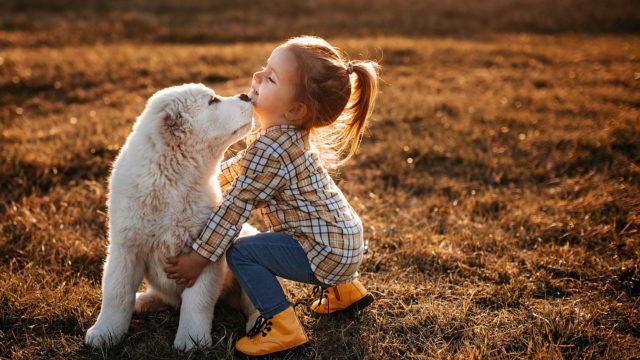 Hengitystieinfektio ei ole niin yleinen koiraperheissä