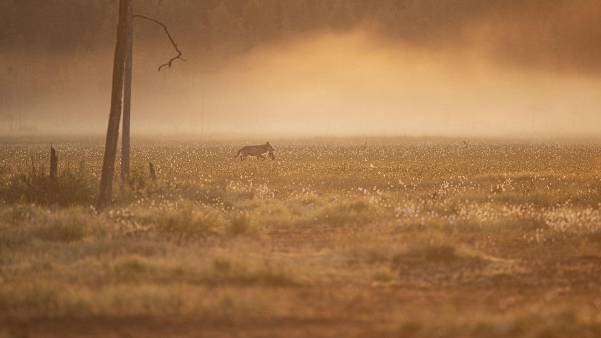 Luontokuvaus aamun sarastaessa