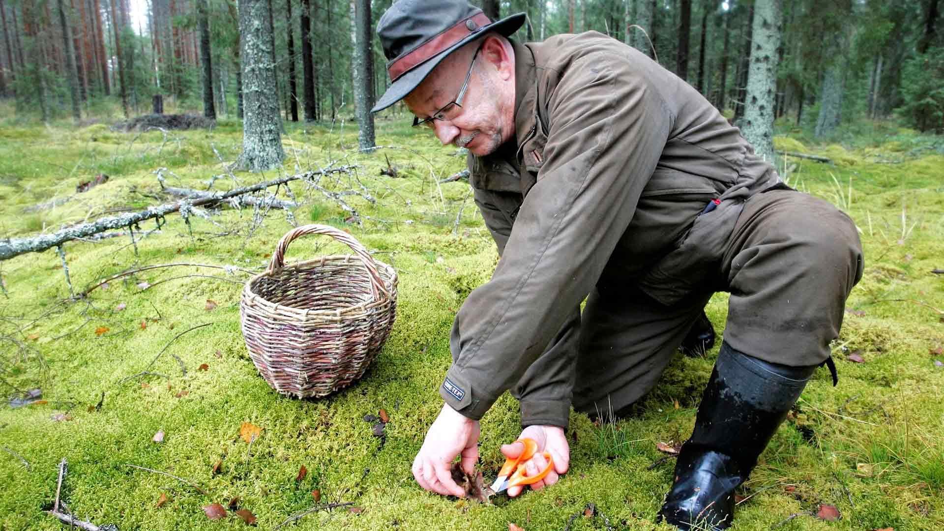 Kari Bagge on keksinyt, että saksien avulla suppiksia saa talteen siististi ja nopeasti.