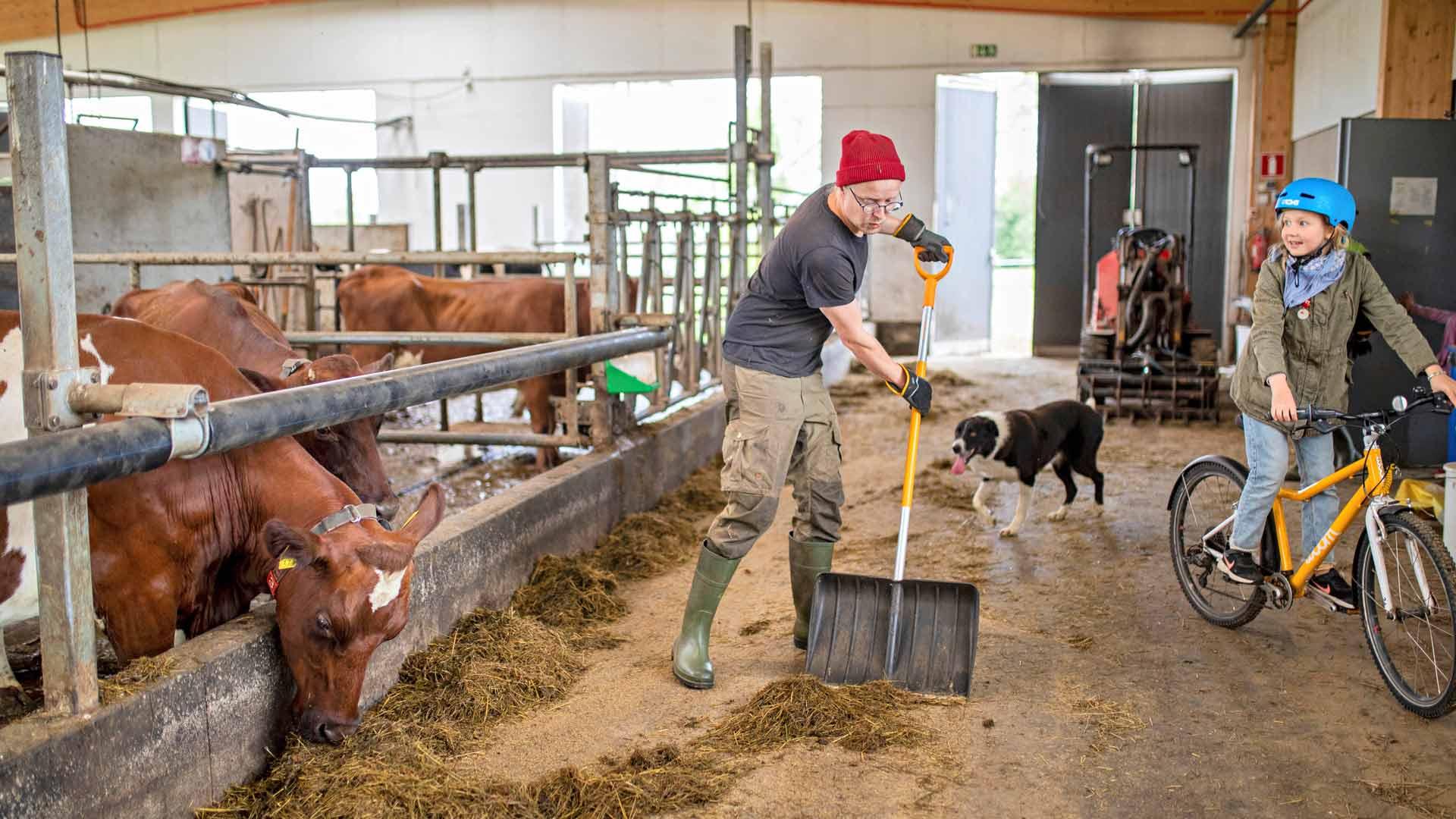 Tuomaksen ja Maisan perhe rakennutti neljä vuotta sitten maitotilalleen uuden modernimman navetan. Karjan määrä tuplattiin ja nyt robottilypsykone lypsää lehmät.