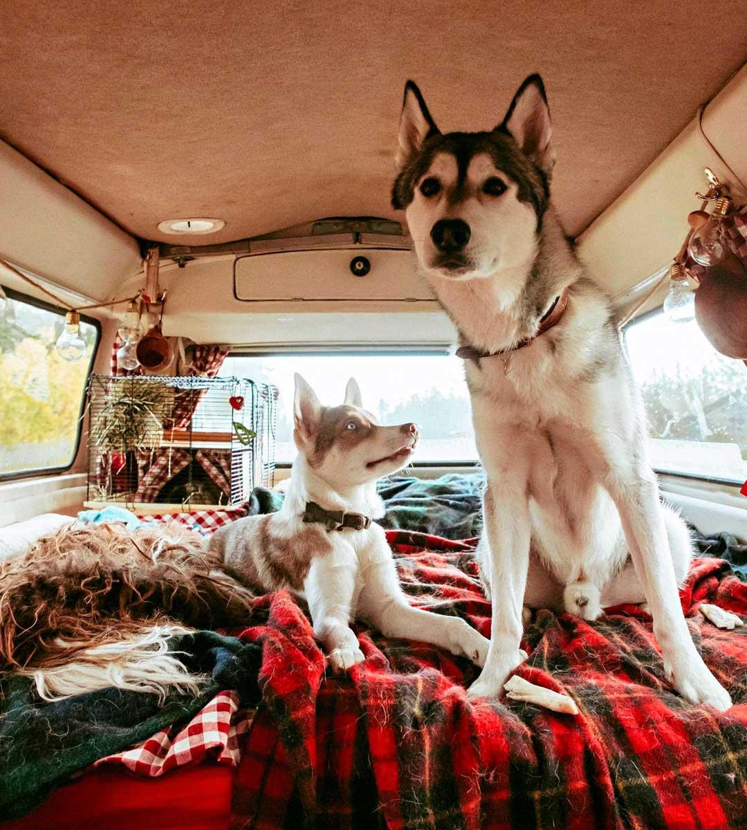 Kuukkelin perällä tiivistyy paitsi tunnelma myös kosteus, kun siellä nukkuu kaksi ihmistä, kaksi koiraa ja kani.