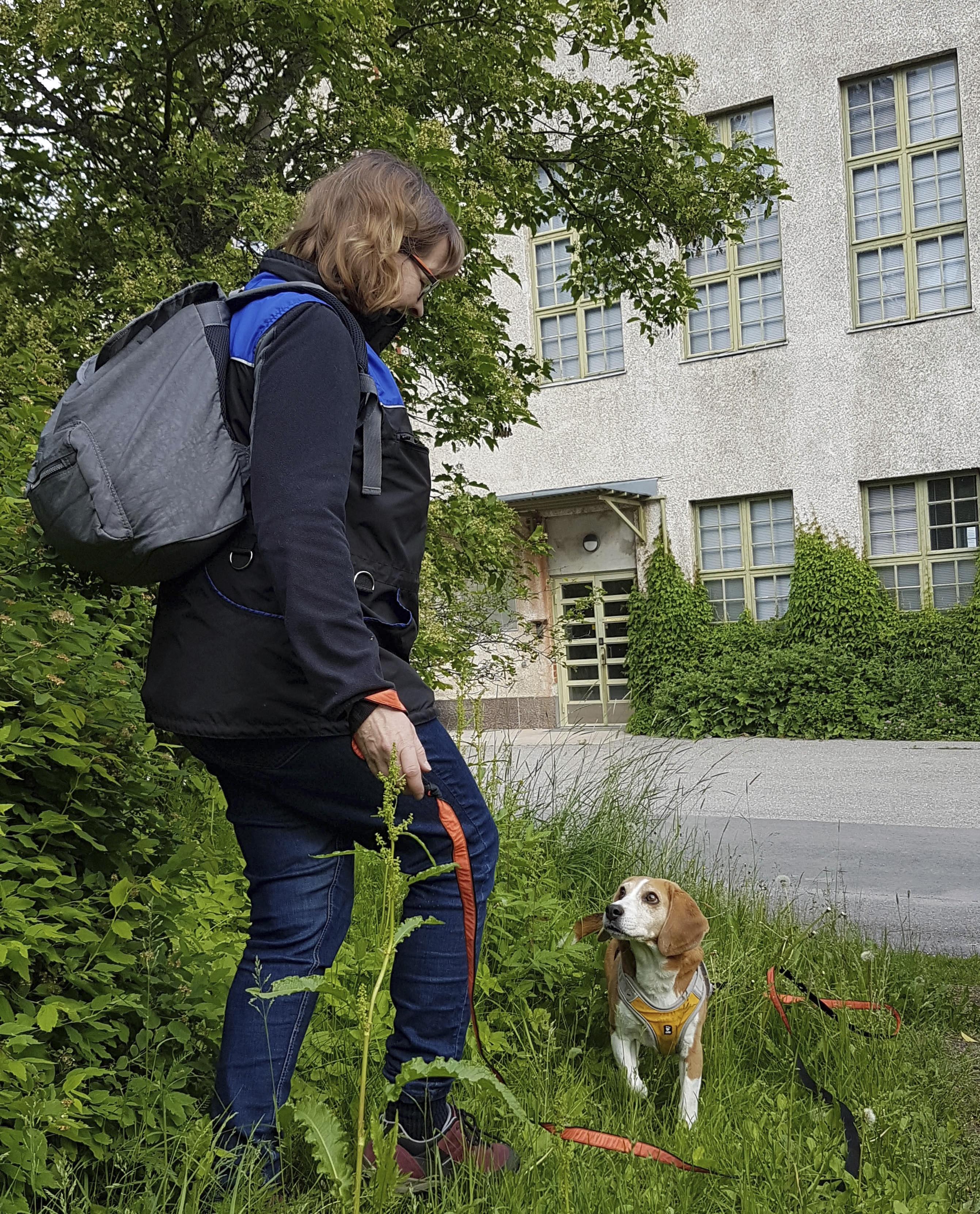Mari Rusanen harrastaa Jutan kanssa hajujen etsintää ja ulkona liikkumista.