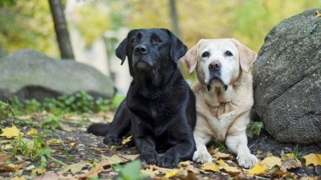 Terve koira ei rapsuta itseään päivittäin. Jatkuva kuopsutus voi olla merkki siitä, että lemmikillä on koirien atopia.