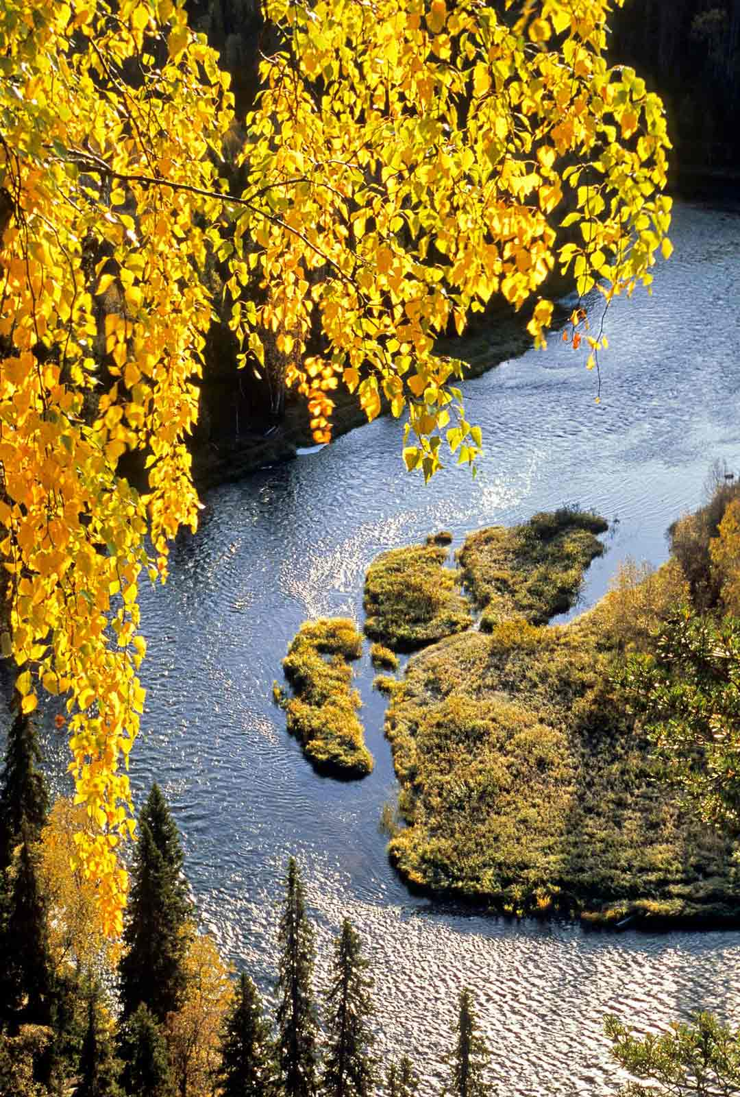 Kuusamo on luontokuvauksen aarreaitta. Maisema Päähkänäkalliolta kitkajoelle on yksi Suomen kauneimpia.
