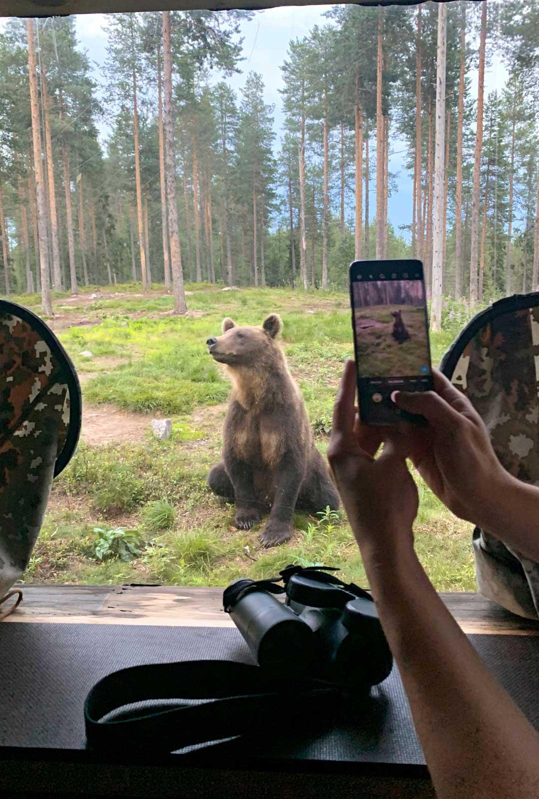 Lammintuvan piilopirtillä villit karhut esittäytyvät lähietäisyydeltä.