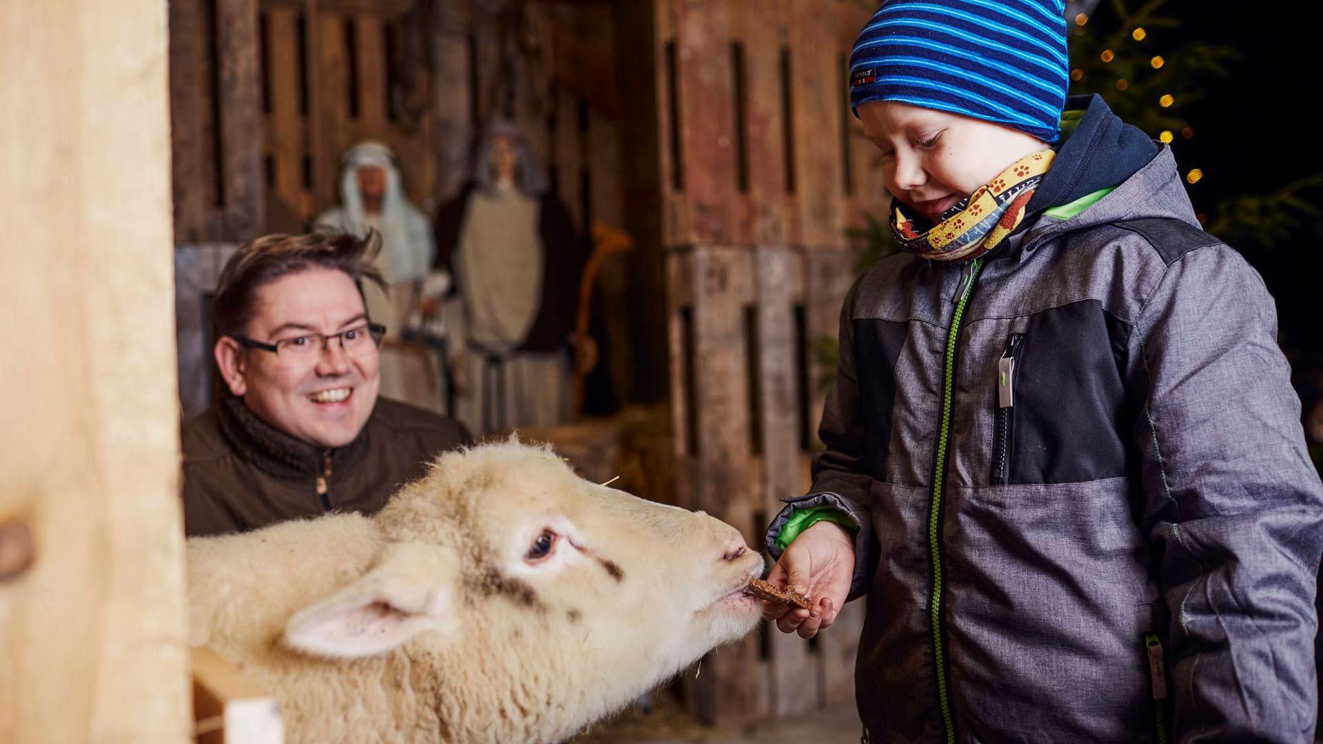 Niilo Pirttikoski pääsi seimipolun aluksi syöttämään lampaita. Vierellä isä Jaakko Pirttikoski.