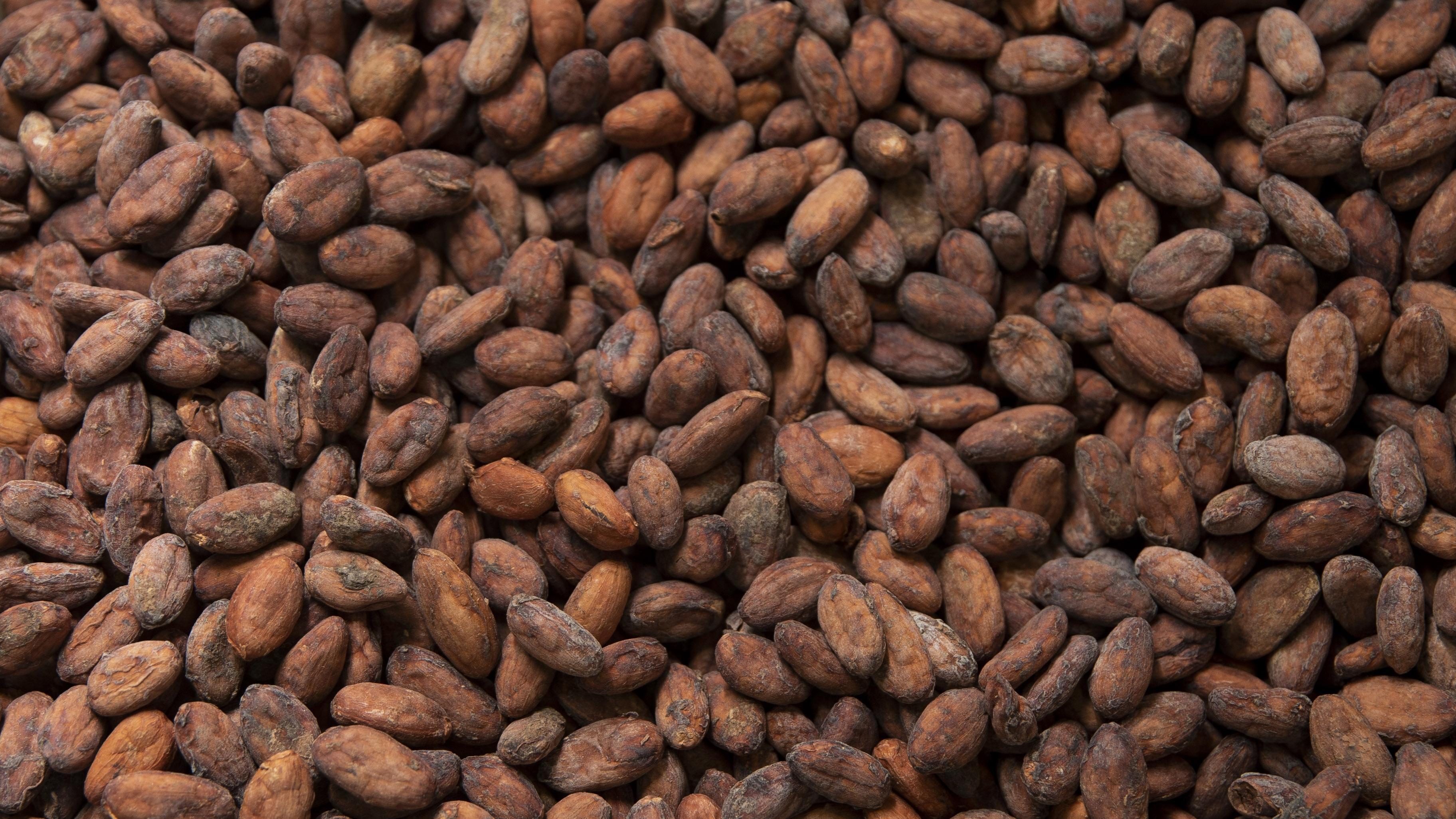 Dammenbergilla suklaa tehdään oikeista kaakaopavuista. Kotioloissa pavuja on vaikea saada riittävän hienoksi. Siksi suklaata kannattaa kotona tehdä kaakaojauheesta.