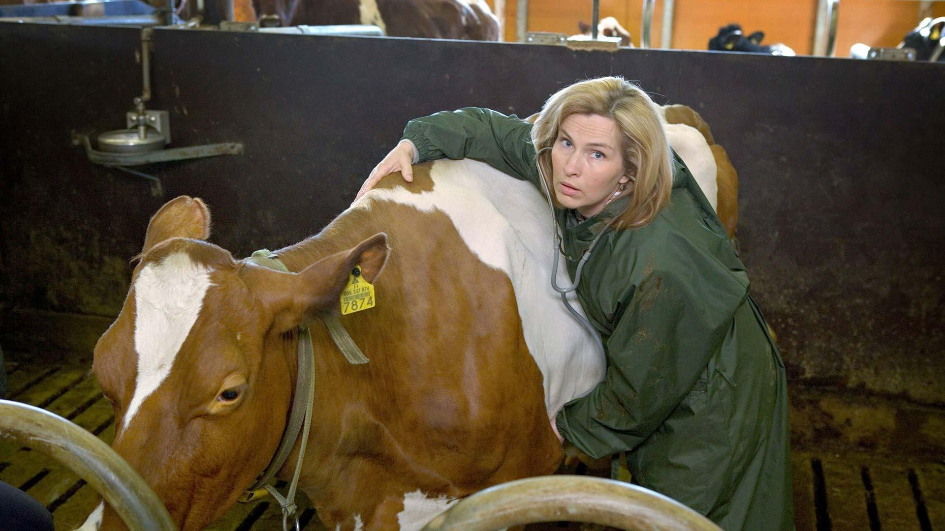 Lehmän vuosi, kuvassa Sari Havas.