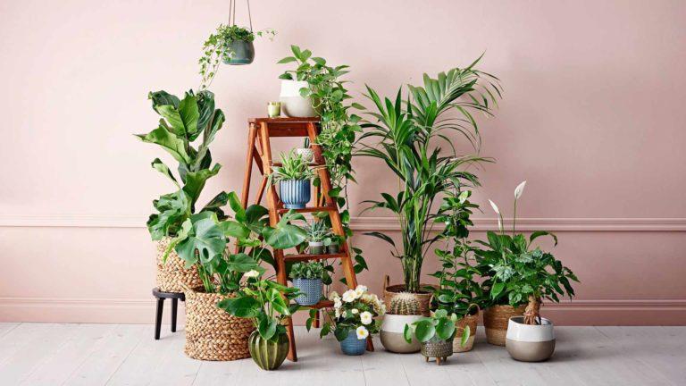 Köynnökset, kaktukset ja isot viherkasvit ovat nyt suosittuja.