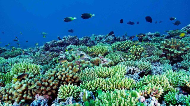 Tutkimus luo toivoa korallien selviämisestä lämpenevällä maapallolla.