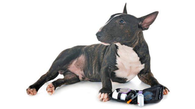 Tulokset osoittivat selvän yhteyden koiran ja ihmisen diabeteksen välillä.