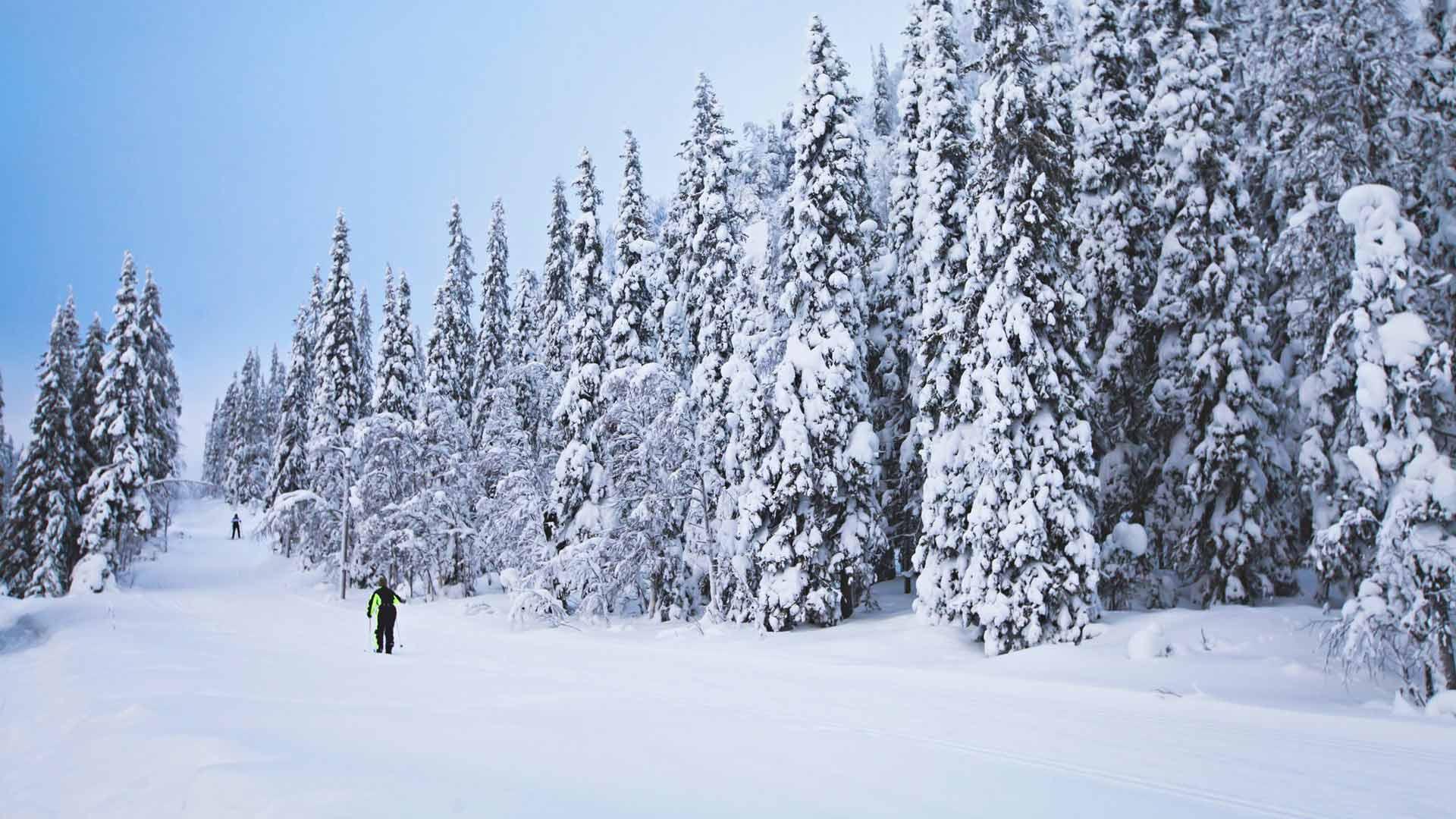 Ladut vievät hiihtäjän keskelle kauneinta talvimaisemaa.