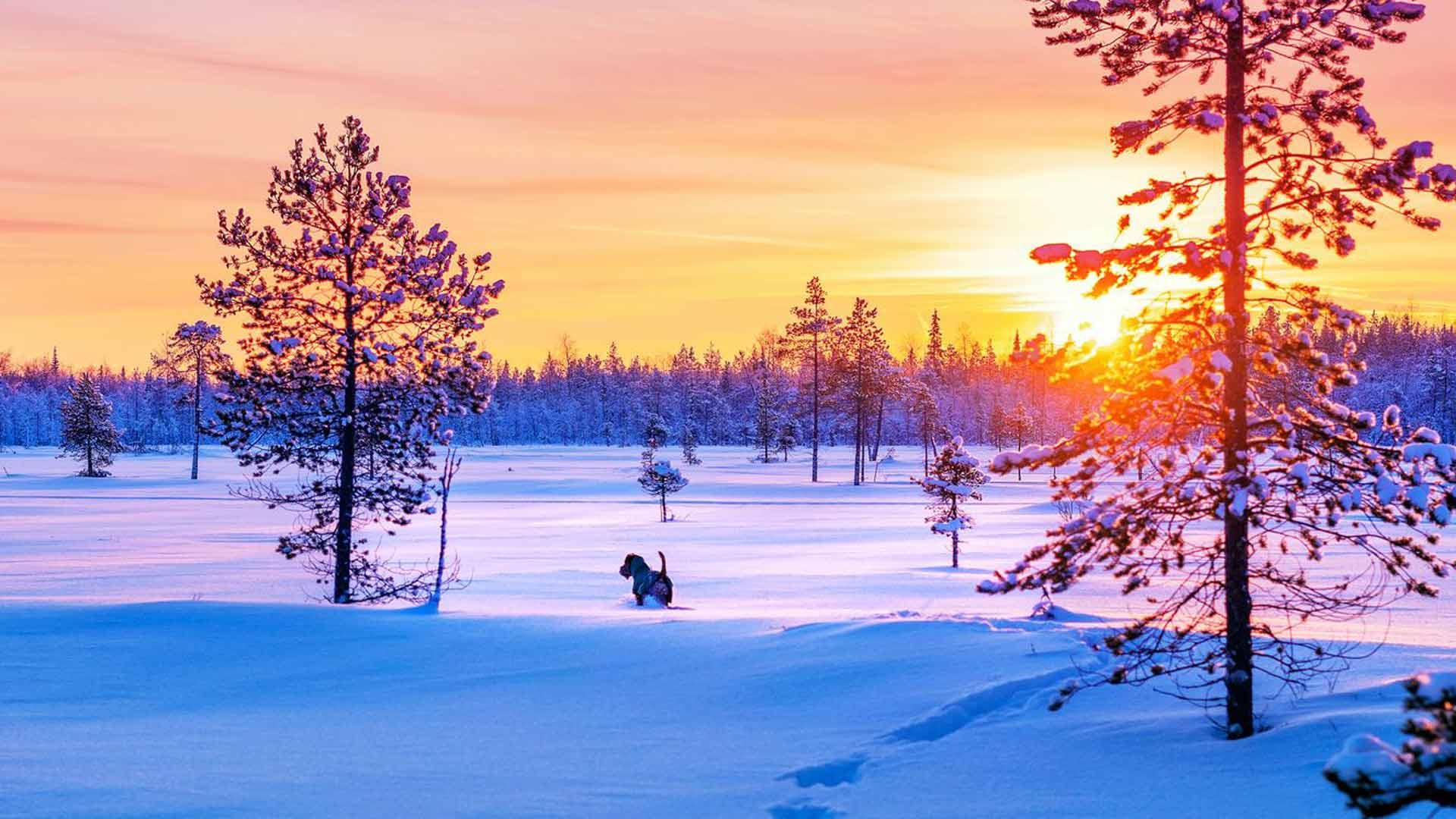 Ainon ja Jerryn irlanninterrieri Arska totutteli ensimmäiset yöt eräkämpässä uusiin ääniin ja heräsi, kun lunta putosi puista. Lääniä on enemmän kuin entisessä elämässä.