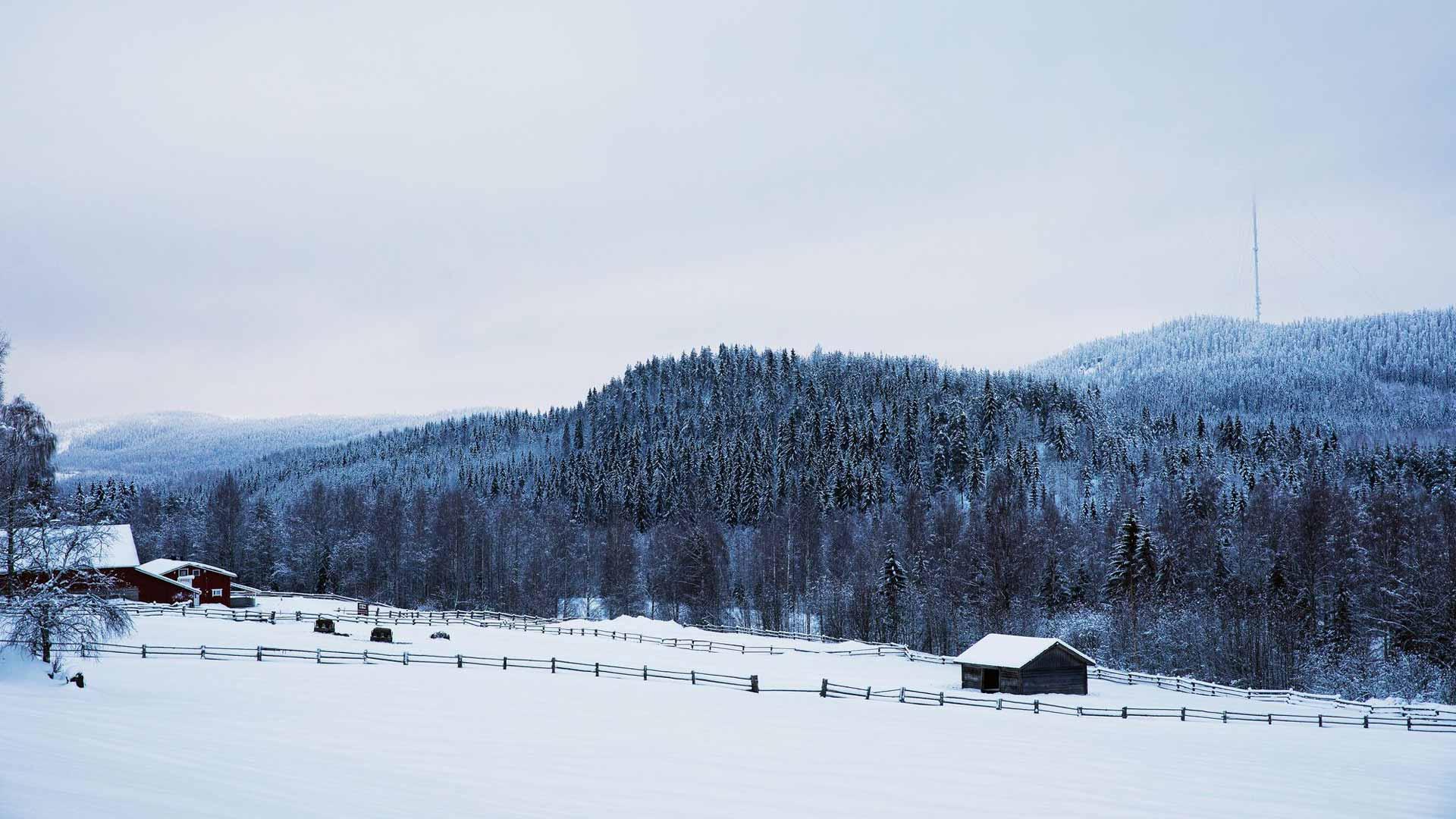 Kolin vaarat tuovat haastetta kokeneillekin hiihtäjille, mutta maisemat palkitsevat.
