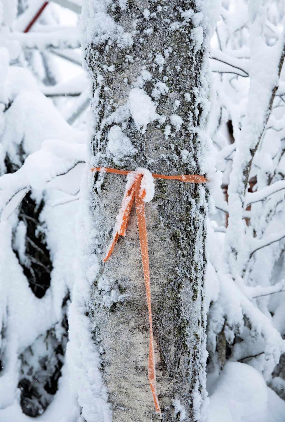 Lumikenkäilyreitti Huippujen kierros on merkitty oransseilla nauhoilla.
