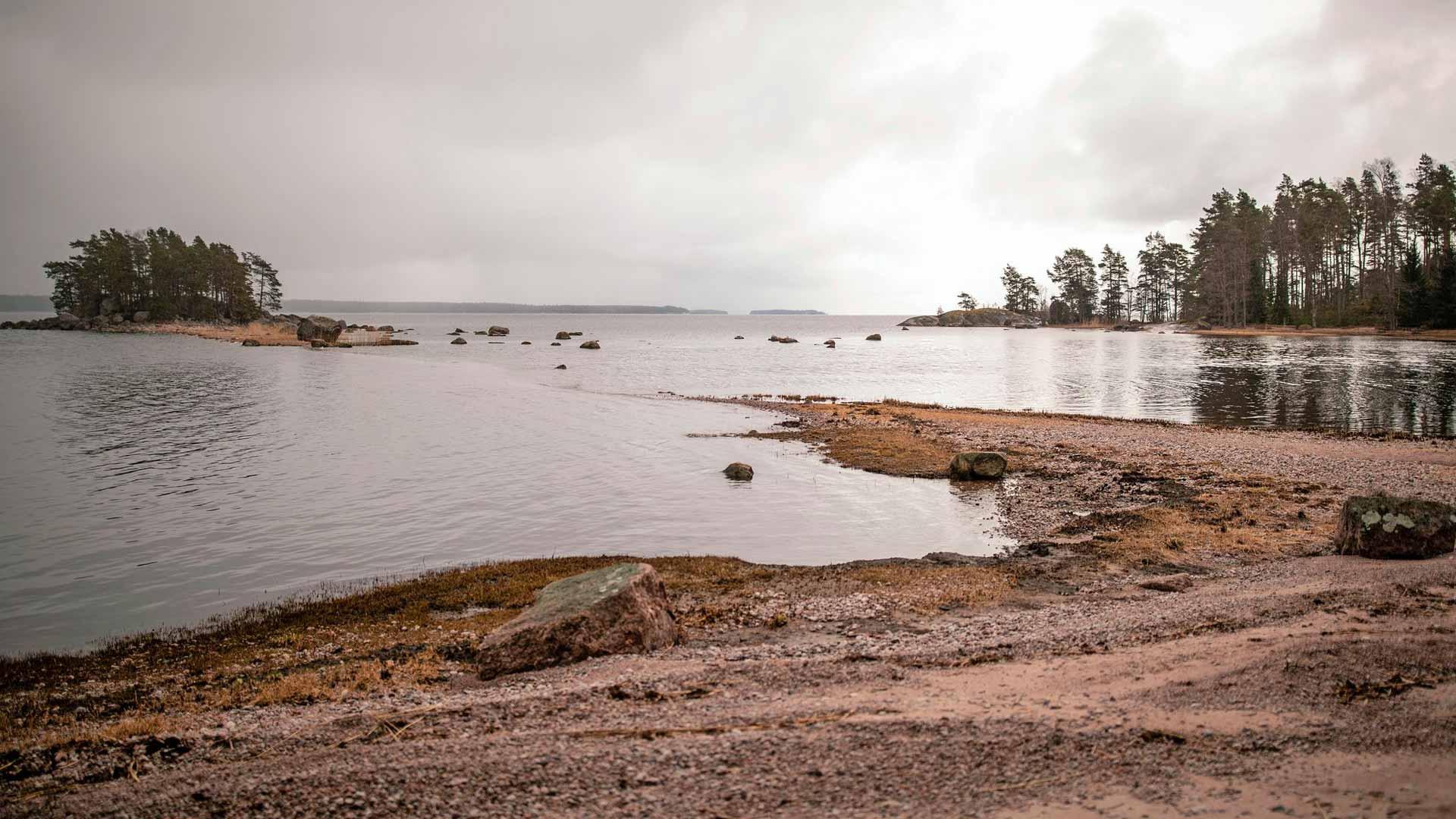 Kevättuulet eivät ole nostaneet veden pintaa eikä Lövön saaren itärannalle ole kulkeutunut kaisloja pois korjattaviksi.