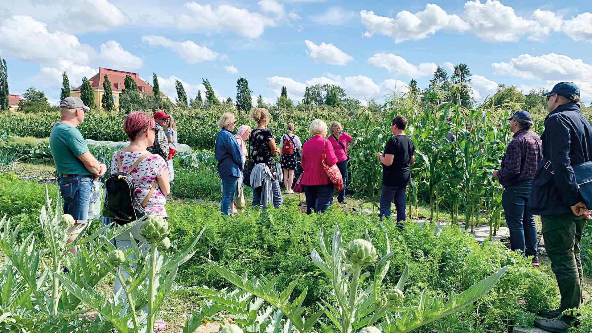 Elokuussa Lepaalla järjestetään ammattilaistasoinen puutarhanäyttely.