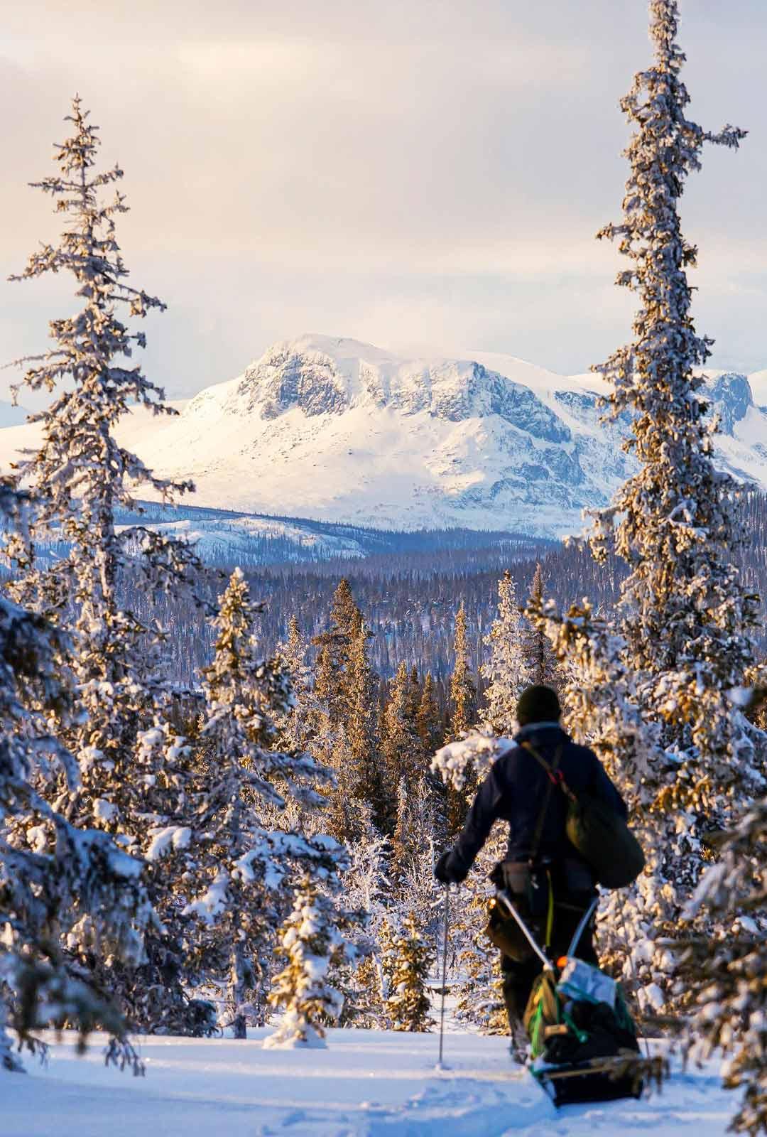 Pohjois-Ruotsin metsät olivat jäämässä taakse helmikuun lopulla 2020, ja edessä oli vaelluksen vuoristo-osuus. Ernon edessä näkyivät Sarekin kansallispuiston vuorenhuiput.