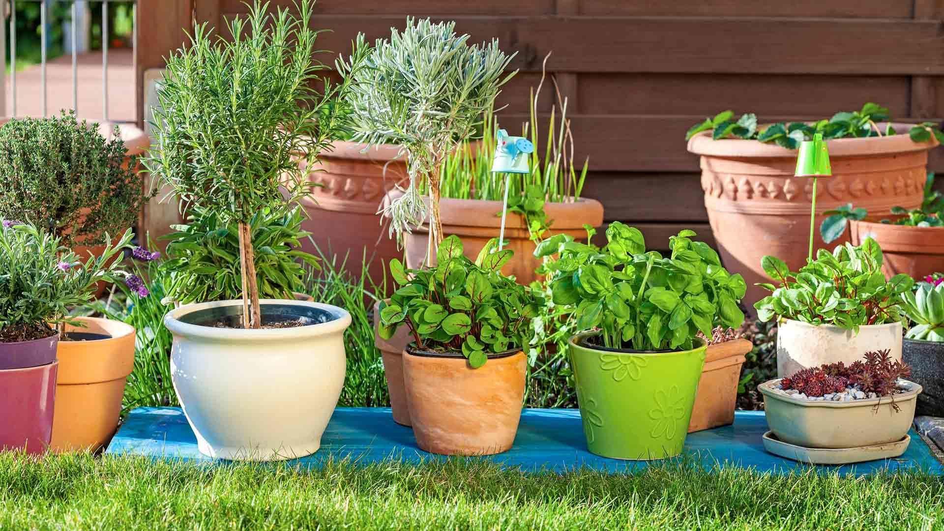 Ruukkukasvit tulee valita kasvupaikan mukaan.