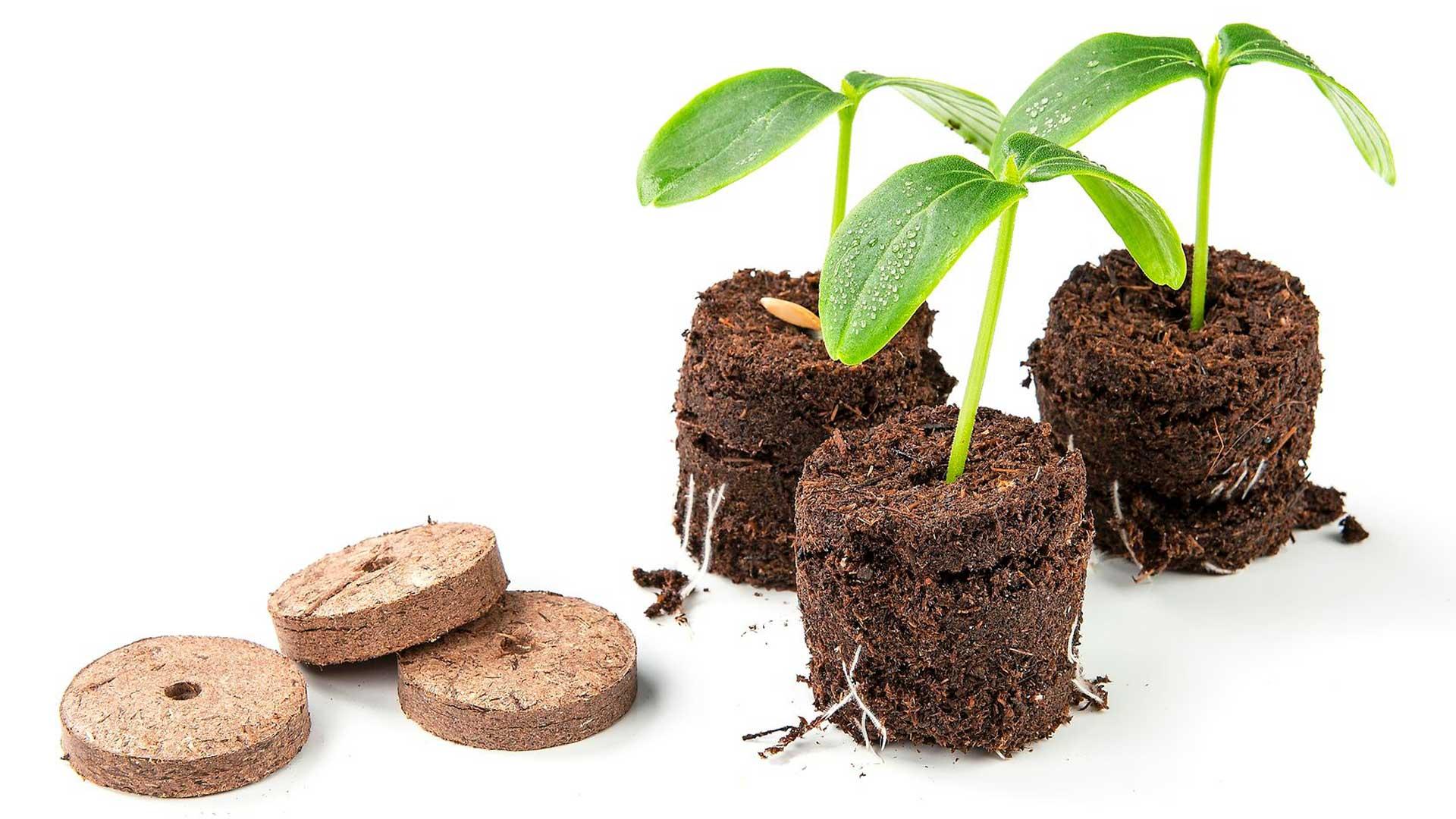 Sammalnappi on tiiviiksi puristettua kotimaista rahkasammalta. Kun sen kastelee, se turpoaa hetkessä käyttövalmiiksi. Käy esimerkiksi yrttien, salaattien ja kukkien kasvualustaksi. 12 kpl noin 4 e, Biolan.
