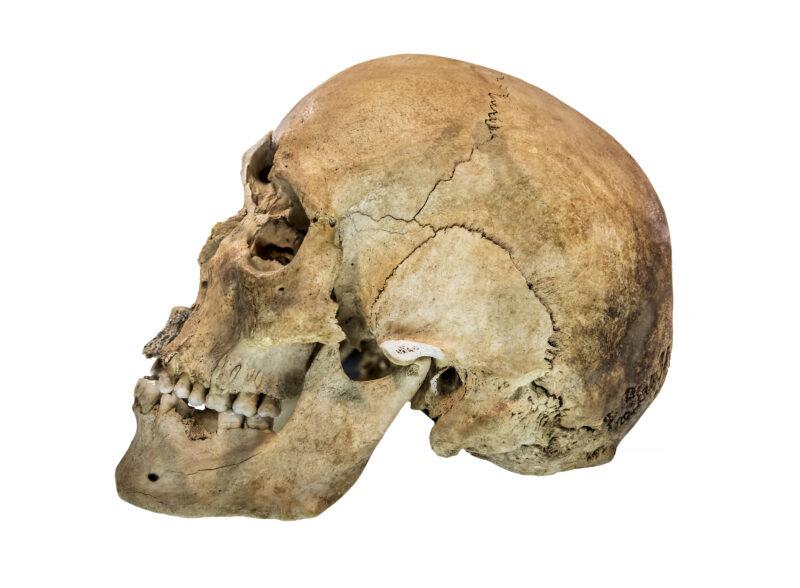 DNA kertoo: Homo sapiens ja neandertalinihminen kohtasivat ja risteytyivät useita kertoja.