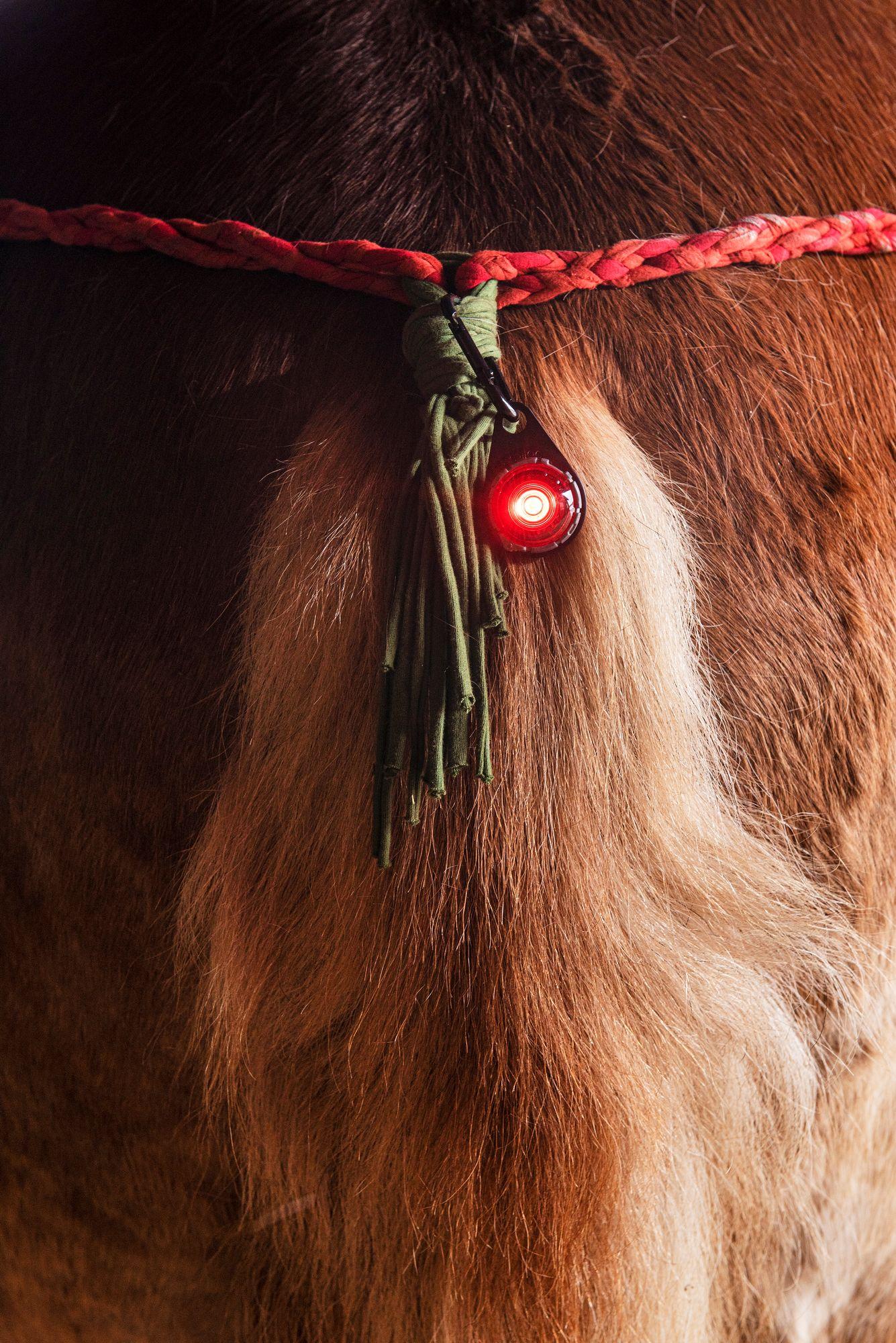 Tieliikennelain mukaan Kullannupulla täytyy olla hännässään punainen perävalo. © Vesa Tyni