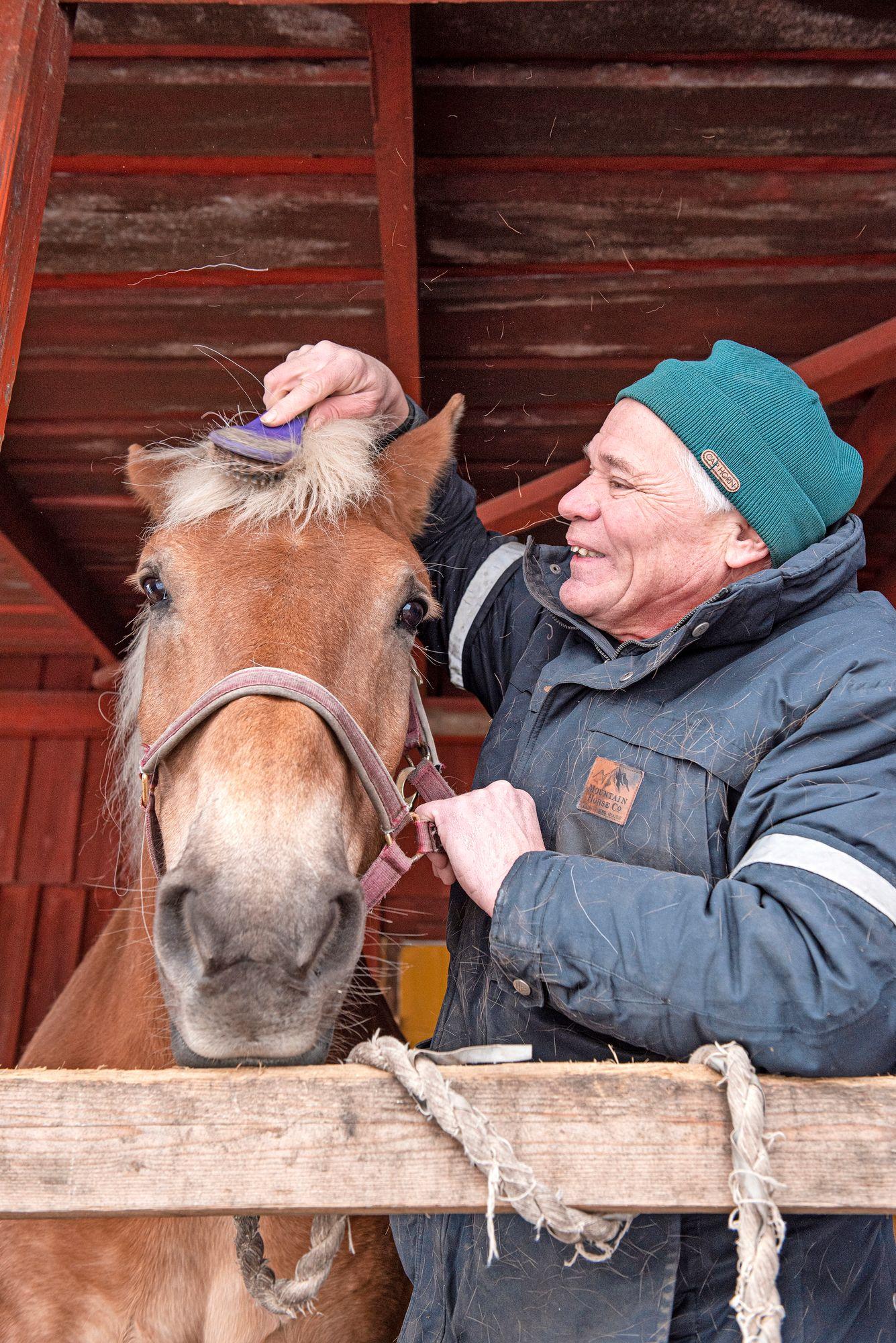 Heikki Mikola laittaa tammansa kampauksen kuntoon. © Vesa Tyni