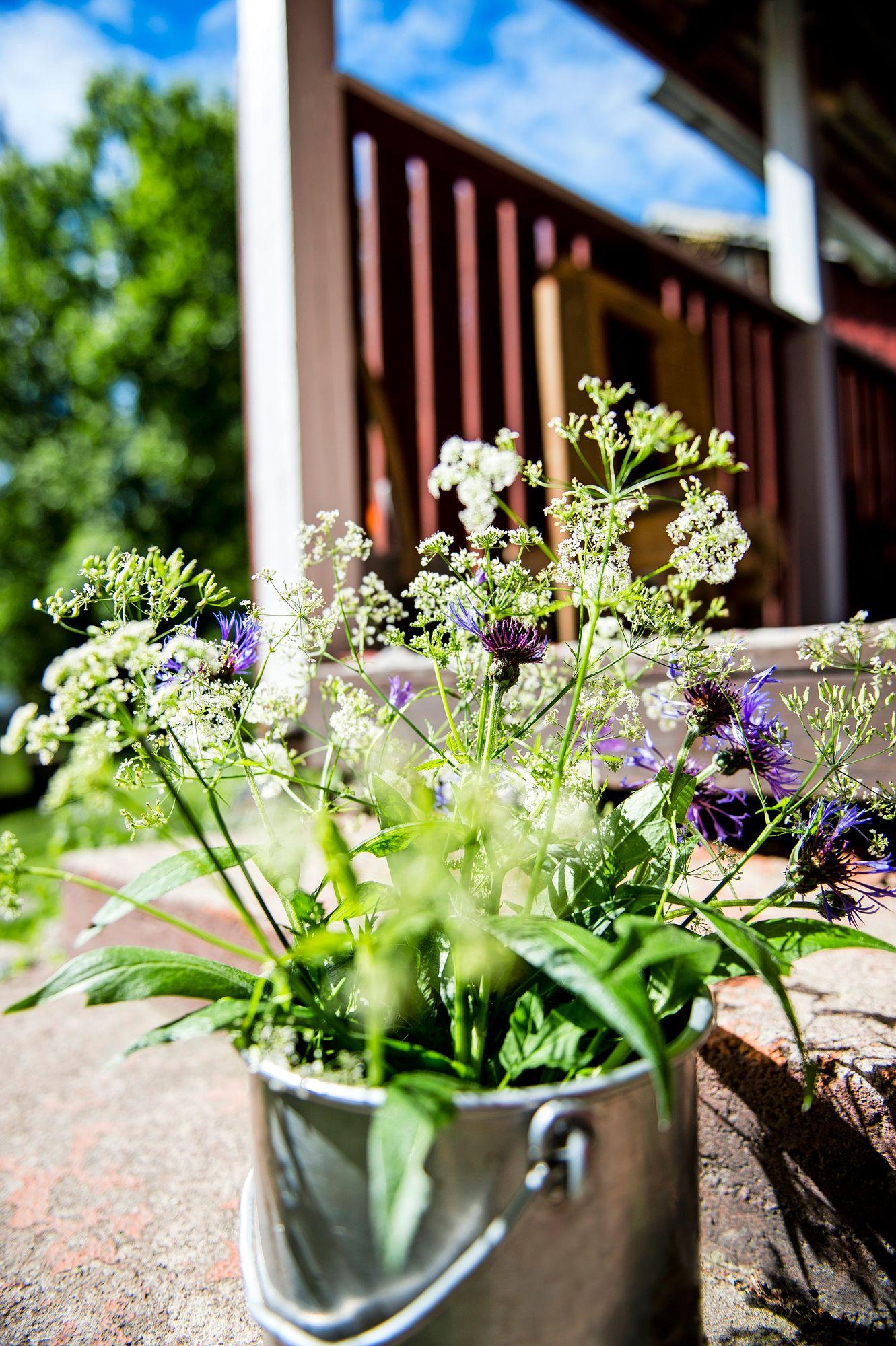 Luonnonkukat sopivat kesäpaikan yksinkertaisen kauniiseen henkeen. © © Ari Heinonen/Otavamedia
