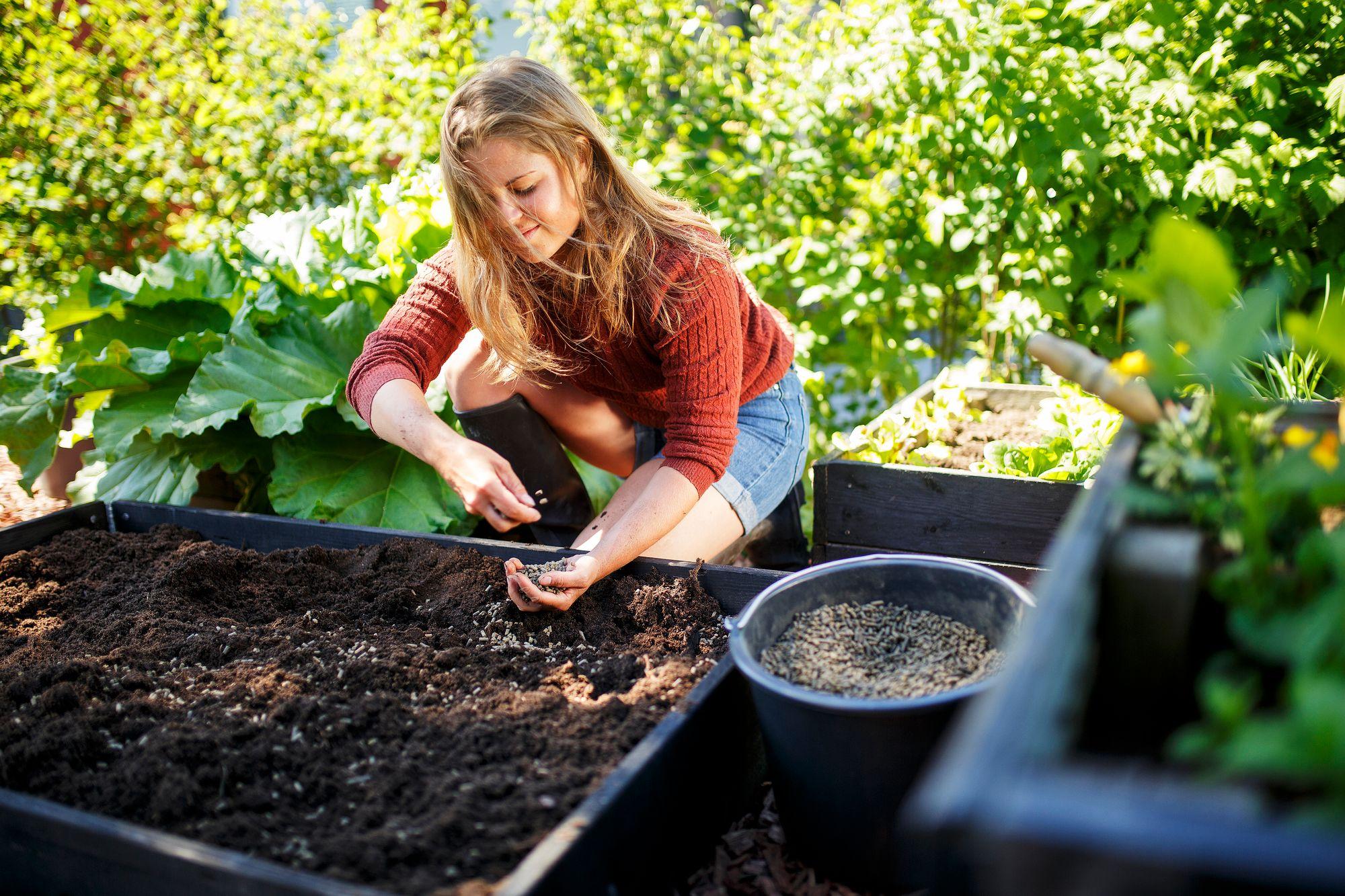 Lavaviljely on kompakti tapa kasvattaa yrttejä, salaattia ja muita kasviksia mökillä. Vesi ja lannoitteet pysyvät kauluksen sisällä. Lavat alk. 9 € © Kekkilä