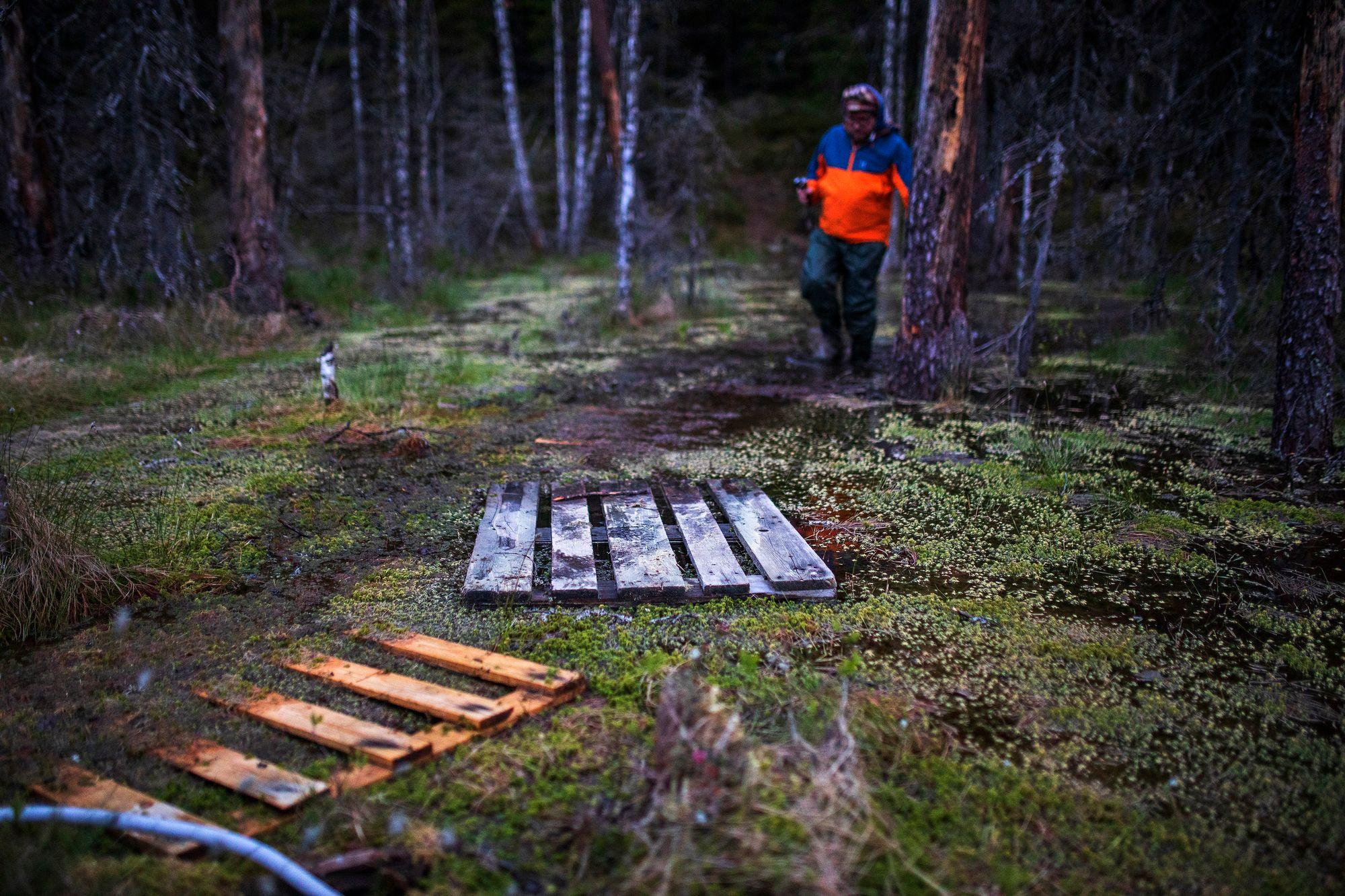 Luonnonperintösäätiön toiminnanjohtaja, kirjailija Pepe Forsberg on huolissaan siitä, että metsät ovat yksipuolistuneet. Lehtipuiden sijaan kuuset ja mäntymetsät valtaavat alaa eikä metsien anneta vanheta rauhassa. © Tommi Mattila