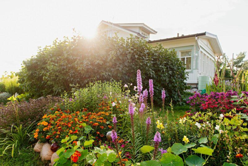 """Loviisan puutarhassa ei ole mitään erityistä värisuunnitelmaa. Kukat loistavat eri väreissä kuin luonnonkukat. <span class=""""typography__copyright"""">© Linda Varoma</span>"""