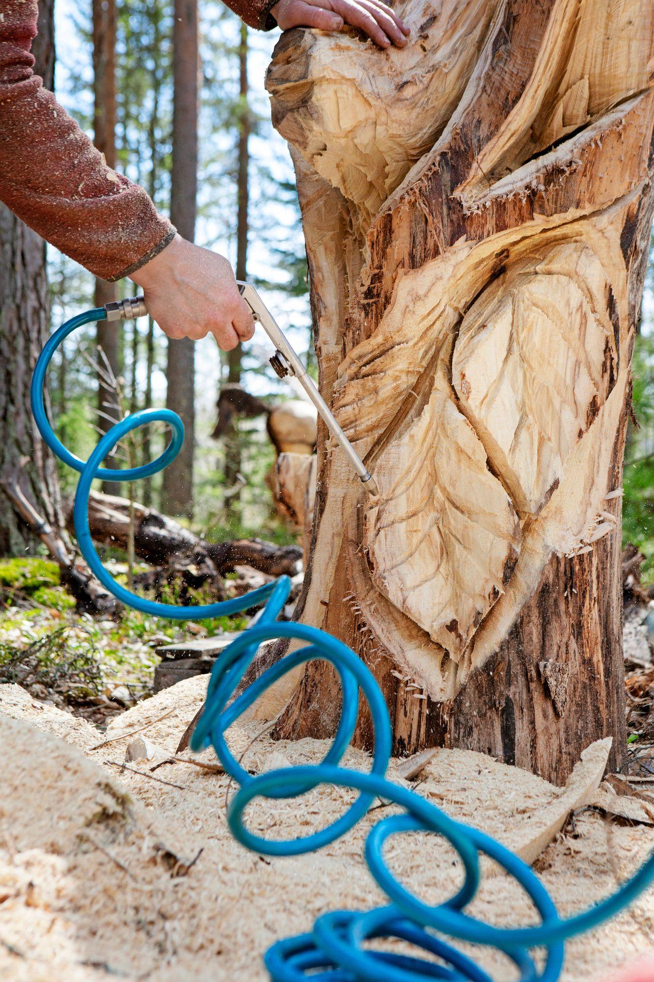 Augustilla on kolme sahaa eri tarkoituksiin. Yksi saha painaa neljä kiloa, ja pienemmällä 2,5 kilon sahalla hän viimeistelee työt. © Tiiu Kaitalo