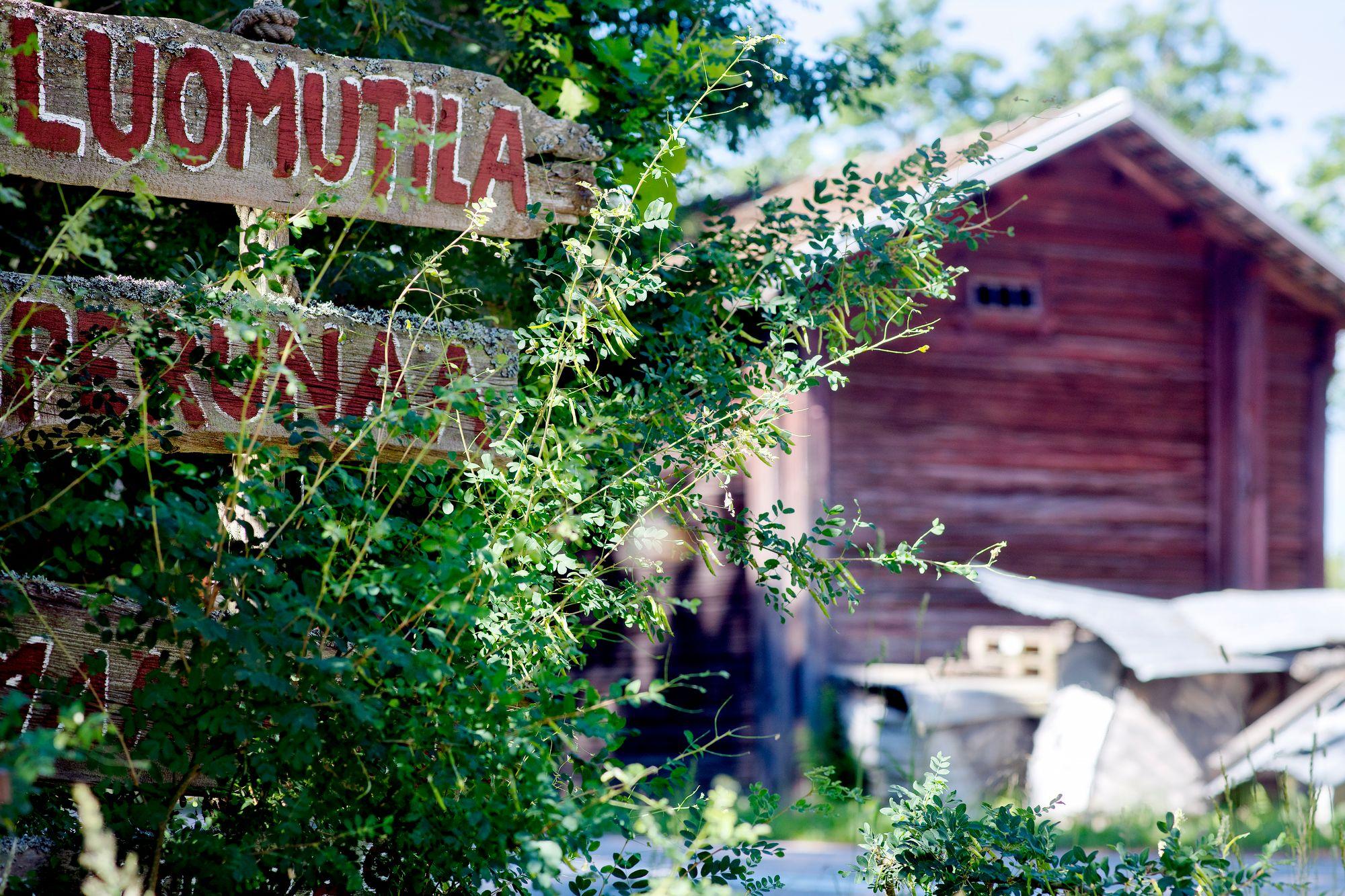 Osuuskuntalaisten toivotaan tekevän vuodessa 16 talkootuntia. Laura hoitaa osuutensa mieluiten Kallion satojaossa. © Sampo Korhonen