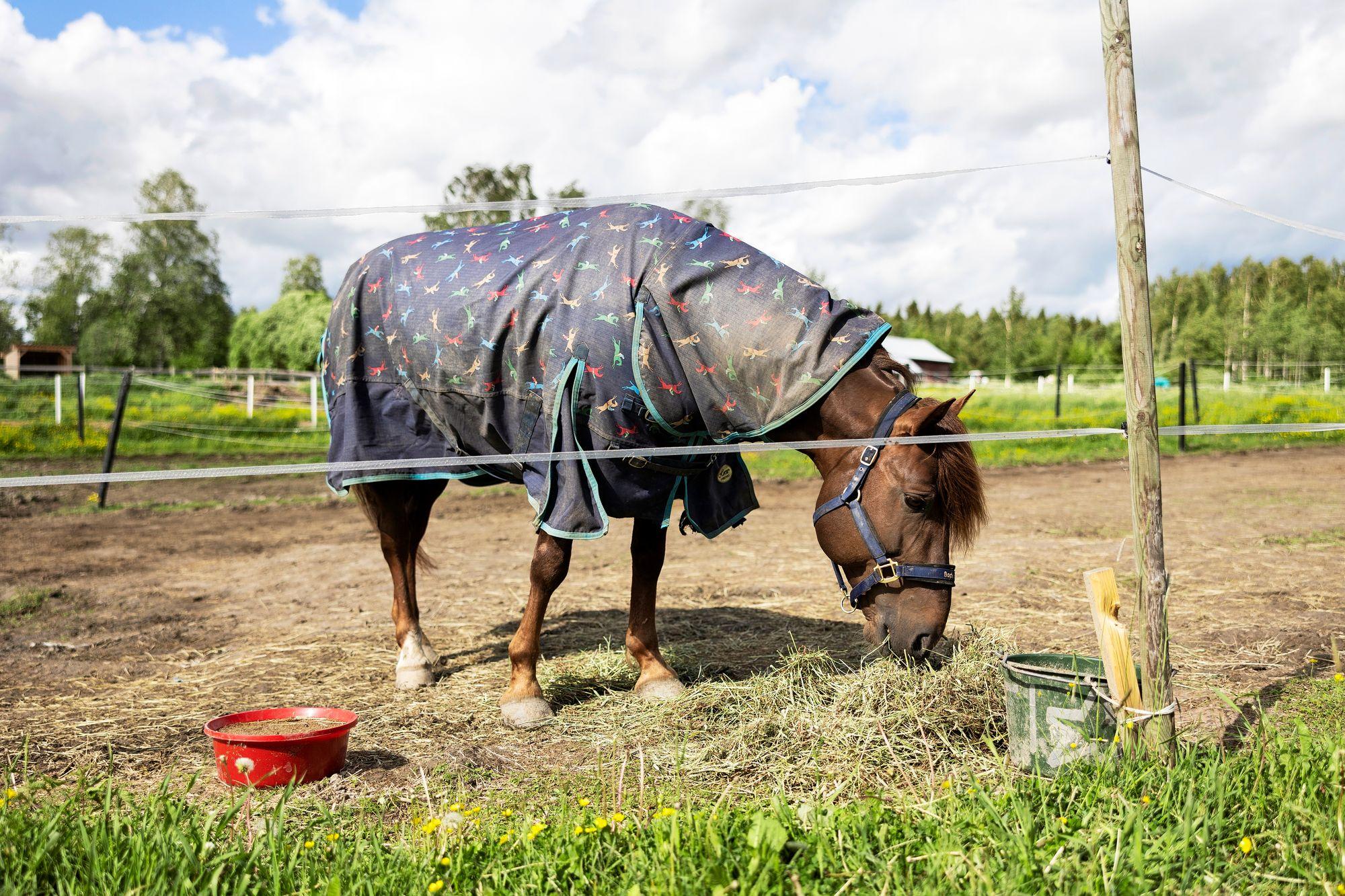 Evartti on kotioloissaan leppoisa herrasmies, mutta ruoholle person ravikuninkaan syömistä on hieman säännösteltävä. © Matias Honkamaa