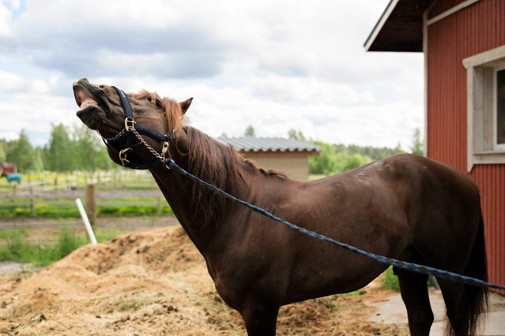 Ravikuningas Evartti on ollut monissa kilpailuissa nopein ja väkevin. Myös taistelussa hengestään ja selviämisestään se on ollut uskomattoman sitkeä.  © Matias Honkamaa