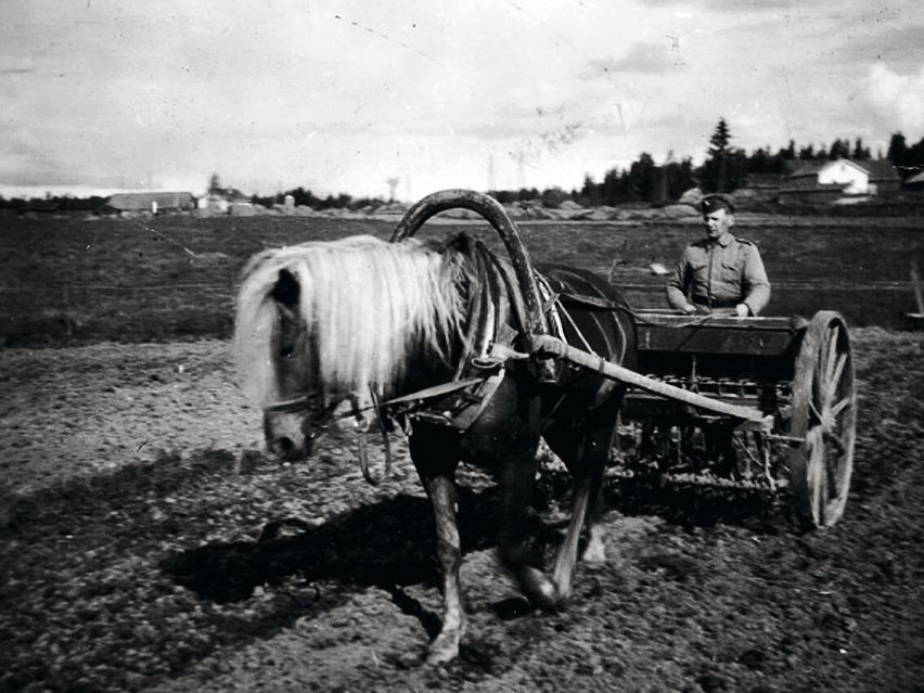 Mikon isoisä hevosen kanssa kylvöpuuhissa. © Suur-Uskin kotialbumi