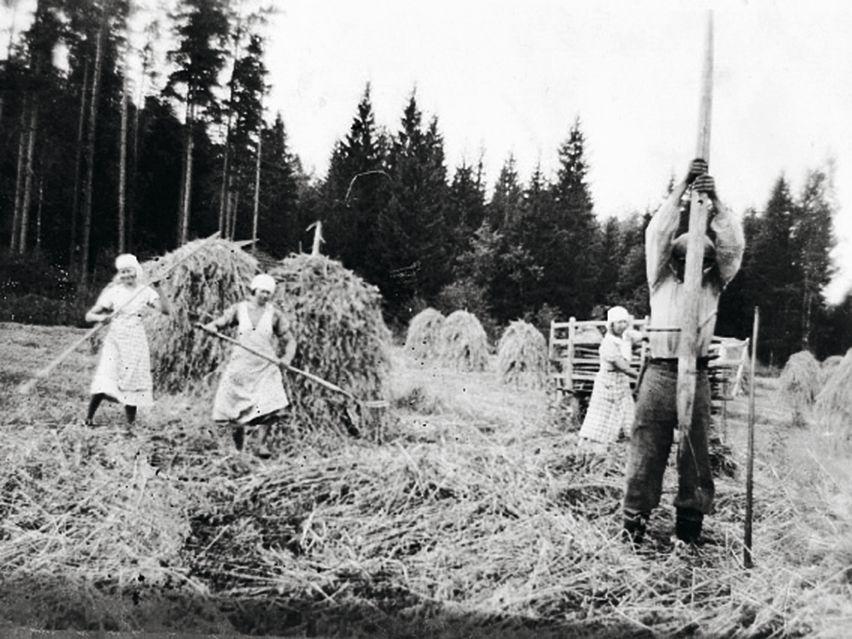 Näin he elivät. Heinäntekoa Takatalon tilalla 40-luvulla. © Suur-Uskin kotialbumi