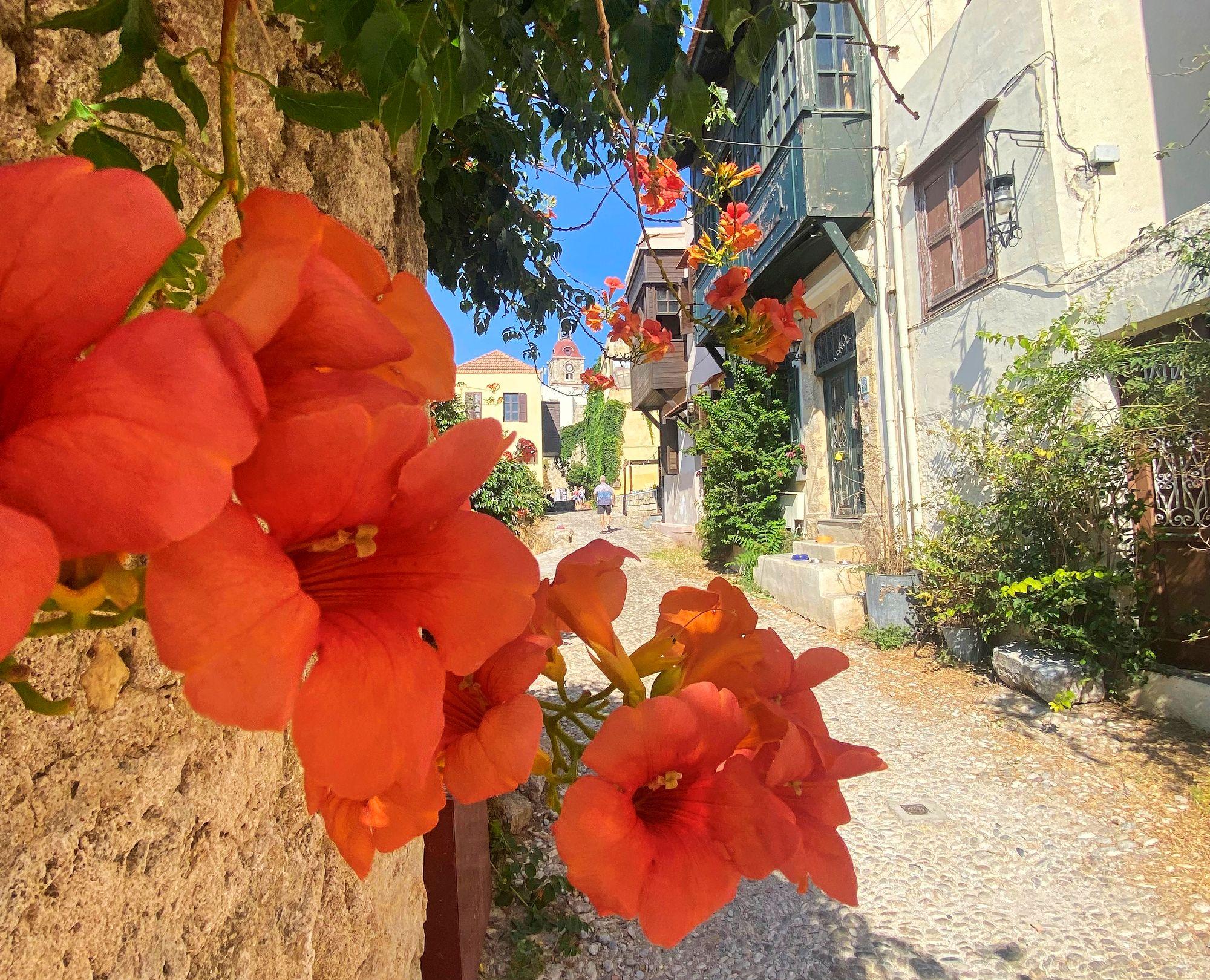 Rodos kukkii kauniina puissa ja pensaissa pitkälle syksyyn. © Liza Meriluoto