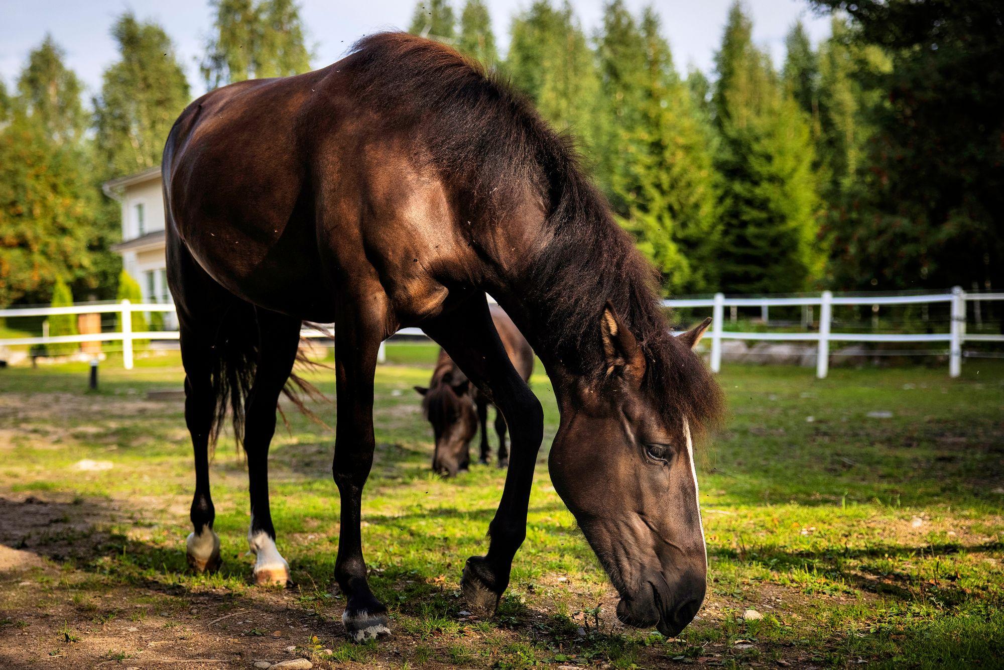 Kun shetlanninponi Stella saapui Kukkakumpuun heinäkuussa, Runoliisa sai kadonneen elämänhalunsa takaisin. Ystävyys kaksikon välillä solmittiin ensikohtaamisella, ja nyt arkea eletään tiiviisti rinnakkain. © Vessi Hämäläinen