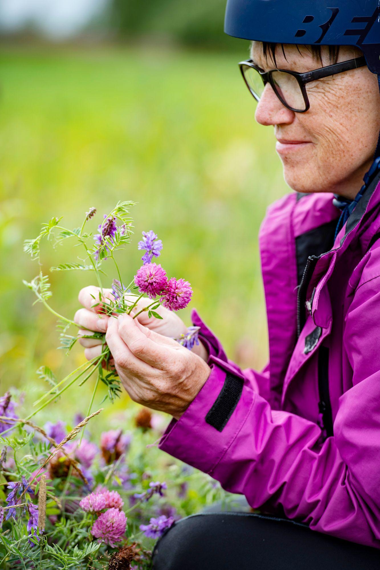 Kannuksen Korpelan kylässä on kauniita luonnonkukkia hiekkatien varrella. © Päivi Karjalainen
